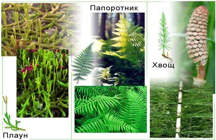 Рассмотрите следующие виды растений